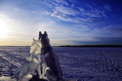 Fototapeta Kochankowie - dwa psy spełniają słońca
