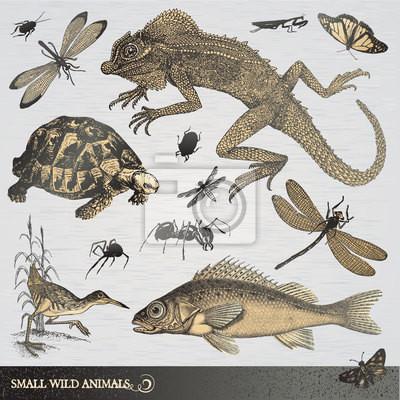 Kolekcja małych dzikich zwierząt