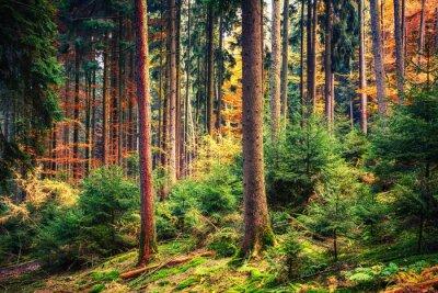 Fototapeta Kolorowa jesień las w Niemczech