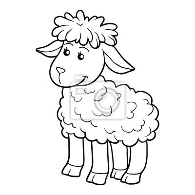 Kolorowanka Owce Fototapeta Fototapety Owca Owca Ubarwienie