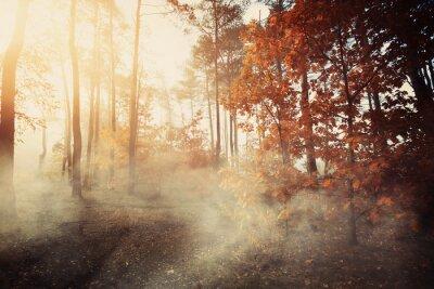 Fototapeta Kolorowe i mglisty las jesienią
