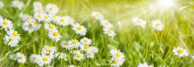 Fototapeta Kolorowe kwiaty łąka wiosną i promieni słonecznych