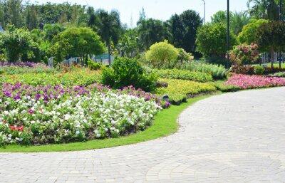 Fototapeta Kolorowe kwiaty w ogrodzie