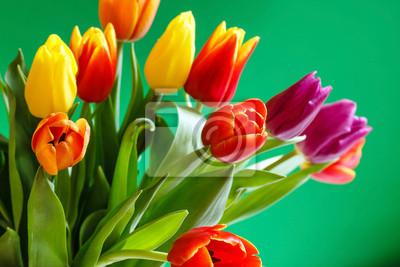 Fototapeta kolorowe tulipany
