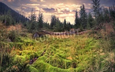Fototapeta Kolorowy lato wschód słońca w magicznym lesie z ogromnym dywanem zielony mech