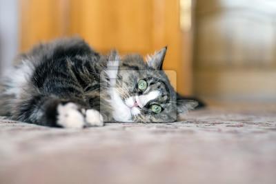 Kot Leży Na Podłodze Kot Leżący Na Dywanie Kot Odpoczynku Na
