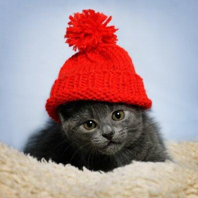 Fototapeta kotek w czerwonym kapeluszu