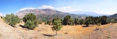 Fototapeta Krajobraz drzew oliwnych na wyspie Krecie