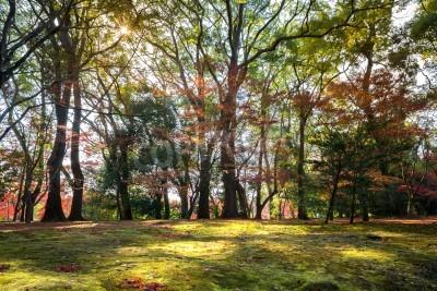 Fototapeta Krajobraz jesienny ogród światła słonecznego Kioto w Japonii