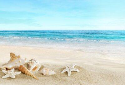 Fototapeta Krajobraz z muszli na tropikalnej plaży