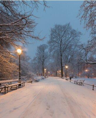 Fototapeta Kraków, Polska, aleja w parku jezior Plant rano podczas śniegu.