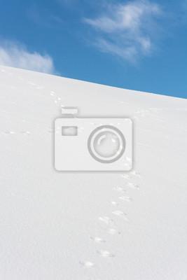 Fototapeta Królik utworów przekraczania w śniegu