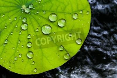 Fototapeta Kropelki wody na liściu Lotus
