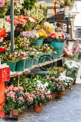 Fototapeta kwiaciarnia
