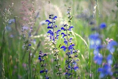 Fototapeta Kwiat łąki podane Piękne łąki kwiat łąki. Selektywne fokus używane.