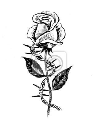 Fototapeta Kwiat Róży I Drut Kolczasty Atrament Czarno Biały Ilustracja