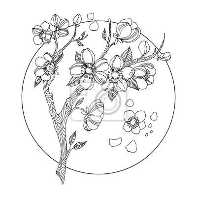 52e9161bdc54ec Kwiat wiśni kolorowania ilustracji wektorowych książki Fototapeta ...