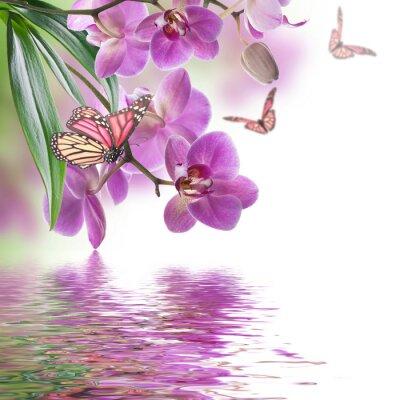 Fototapeta Kwiatów tle z tropikalnych storczyków i motyli