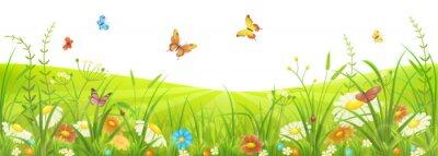 Fototapeta Kwiatowy latem lub wiosną łąki z zielona trawa, kwiaty i motyle