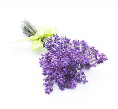Fototapeta kwiaty lawendy