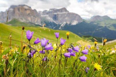 Fototapeta Kwiaty na łąkach nad doliną Val di Fassa, Dolomity, Włochy
