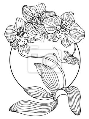 8234ba34d25b50 Kwiaty orchidei kolorowania ilustracji wektorowych Fototapeta ...
