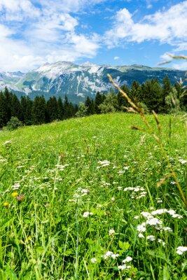 Fototapeta Kwiaty w łące Alpy krajobrazu w lecie turystyka pogodowa