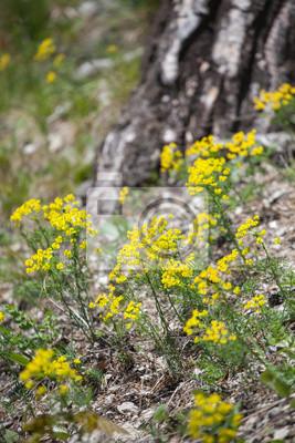 Kwiaty w lesie