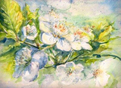 Fototapeta Kwitnienie oddział akwarela malowane wiśniowego drzewa