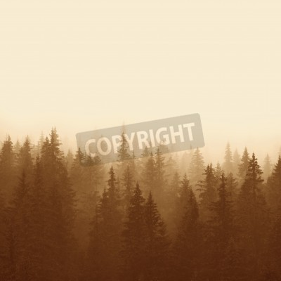 Fototapeta las sosnowy w górach z mgły