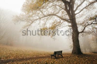 Fototapeta Las w jesiennym nastroju z mgłą i słońcem