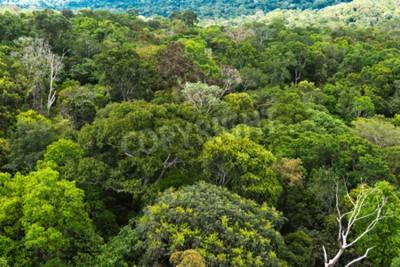 Fototapeta Lasów Amazonii w Brazylii