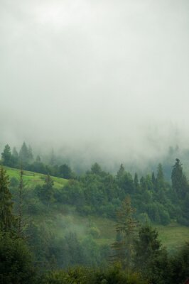 Fototapeta lasy iglaste w górach we mgle