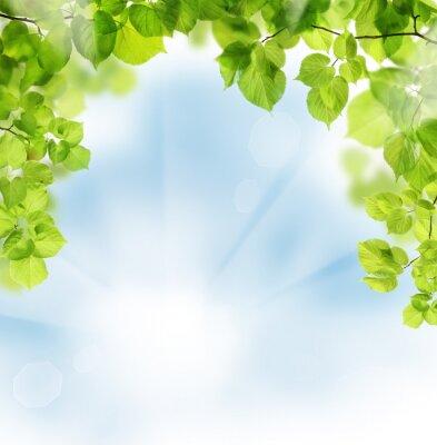 Fototapeta Lato liście na tle kwiatów zieleni