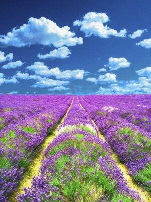Fototapeta Lavender pola. Obraz olejny.