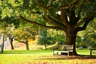 Fototapeta Ławka pod drzewem w Royal Botanic Gardens w Londynie