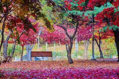 Fototapeta Ławka w parku z wieloma liśćmi czerwonego klonu. Spokojne miejsce.