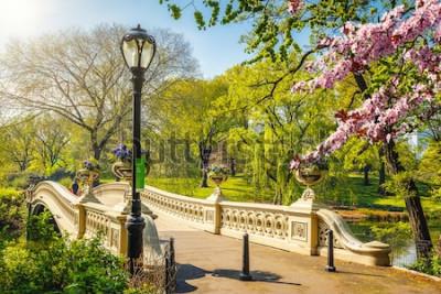 Fototapeta Łęku most w central park przy wiosna słonecznym dniem, Miasto Nowy Jork