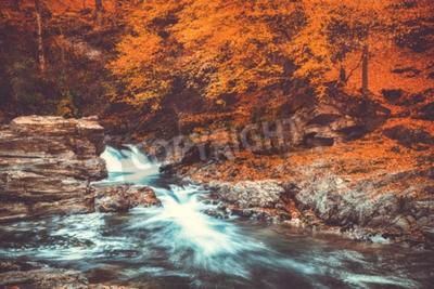 Fototapeta Letni krajobraz z pięknym bukowym lesie.