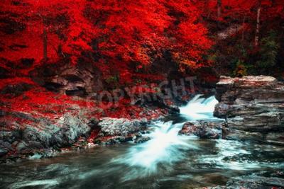 Fototapeta Letni krajobraz z pięknym bukowym lesie. Górski potok z kaskadami. Efekt miękkie. Kolor tonujące