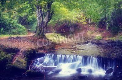 Fototapeta Letni krajobraz z pięknym bukowym lesie Górski potok z kaskadami tonowanie kolorów miękkich efekt