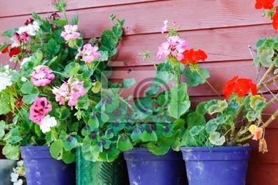 Fototapeta letnie kwiaty