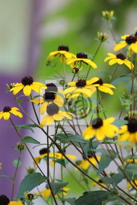 Letnie Kwiaty Ogrodowe Fototapeta Fototapety Makro Liść łąka