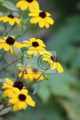 Letnie Kwiaty Ogrodowe Fototapeta Fototapety Flora Kolor Płatki