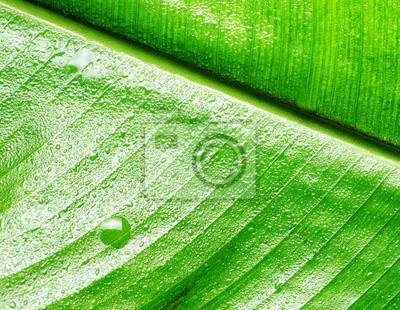 Fototapeta liść