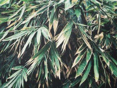 Fototapeta liści bambusa