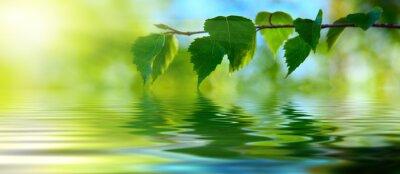 liście brzozy i wody