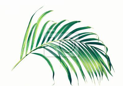 Fototapeta Liście palmowe na białym tle.