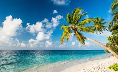 Fototapeta Lonely plaży na Malediwach