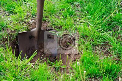 Fototapeta Łopata w glebie